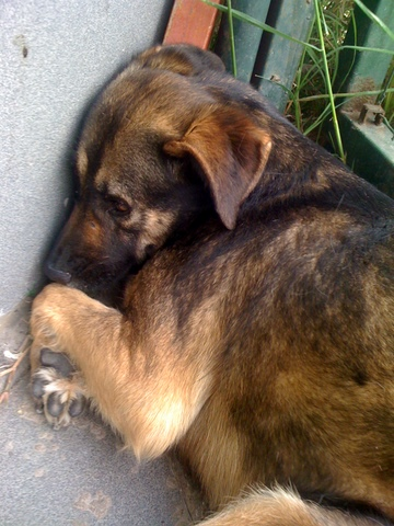 poor-dog
